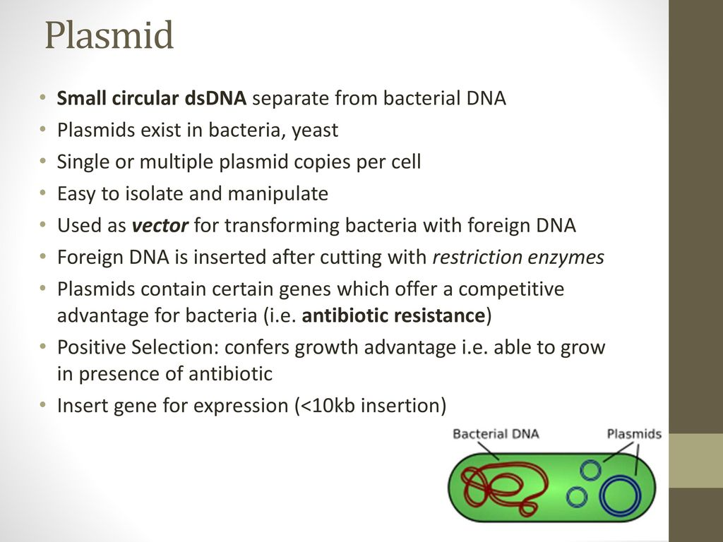 Plasmid Small circular dsDNA separate from bacterial DNA