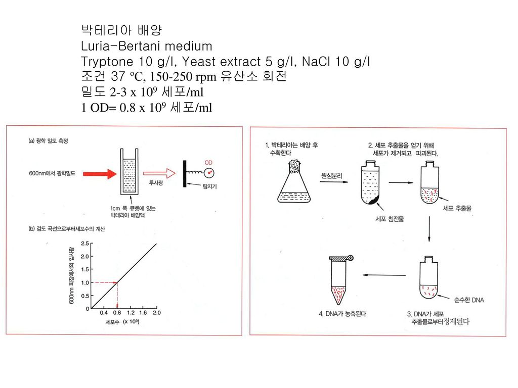 박테리아 배양 Luria-Bertani medium. Tryptone 10 g/l, Yeast extract 5 g/l, NaCl 10 g/l. 조건 37 ºC, rpm 유산소 회전.