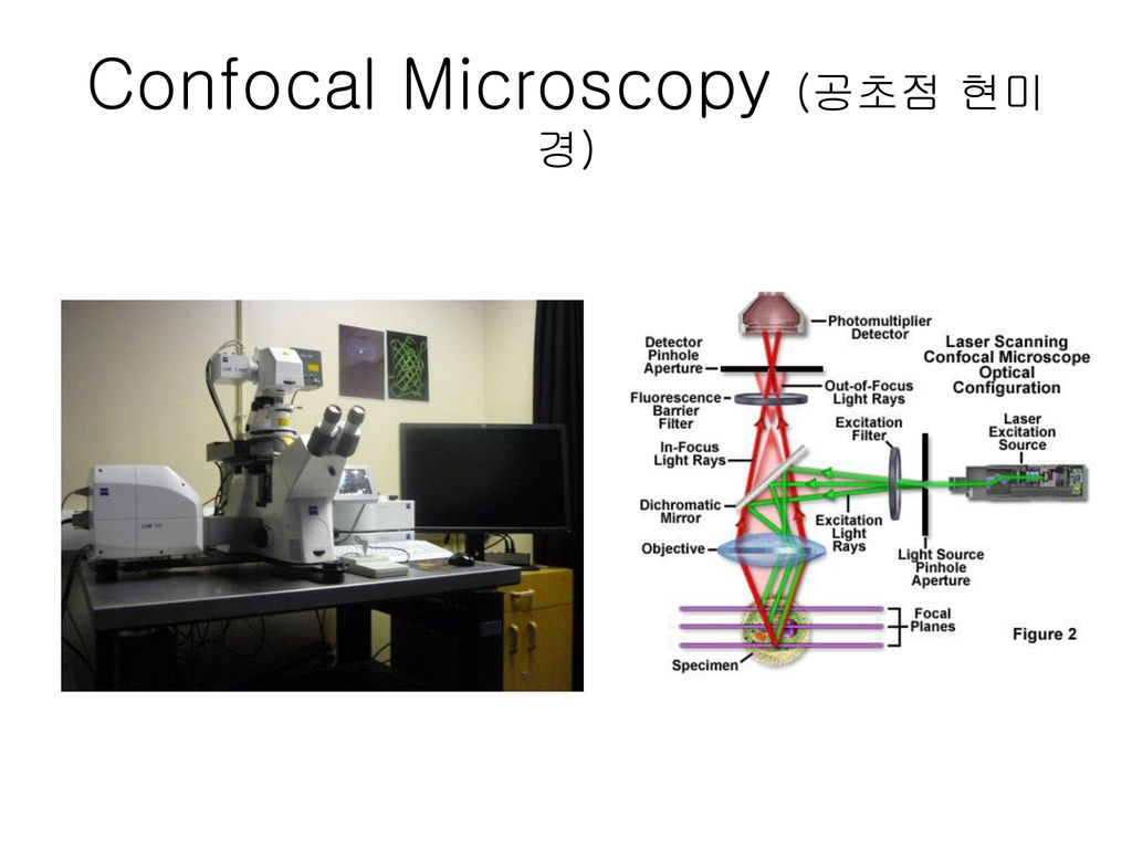 Confocal Microscopy (공초점 현미경)