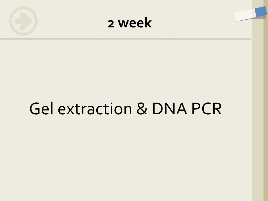 Gel extraction & DNA PCR