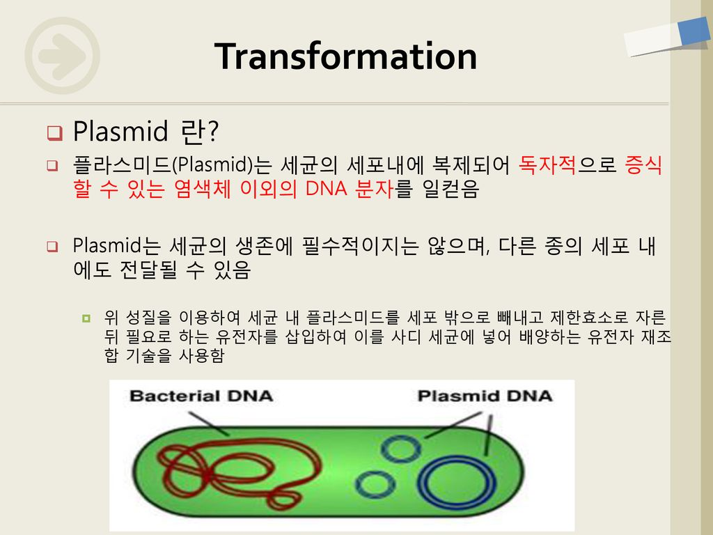 Transformation Plasmid 란