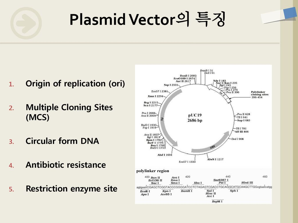 Plasmid Vector의 특징 Origin of replication (ori)