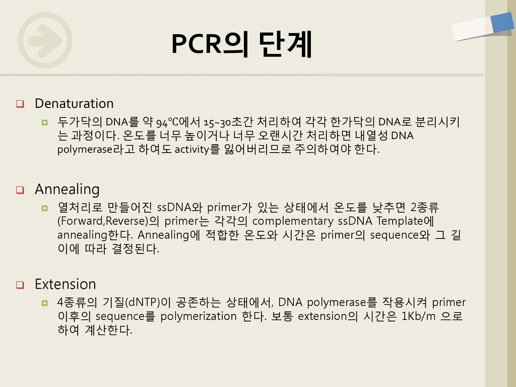PCR의 단계 Denaturation Annealing Extension