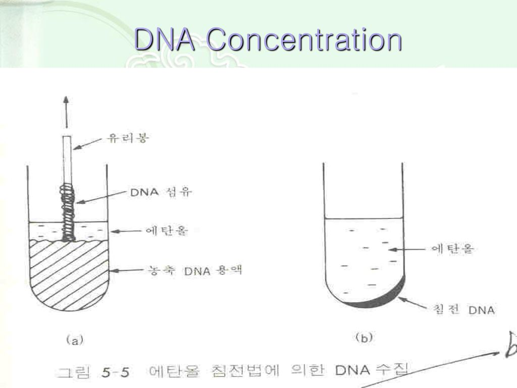 DNA Concentration