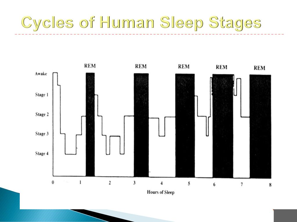 Cycles of Human Sleep Stages