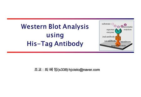 Western Blot Analysis using His-Tag Antibody 조교 : 최 혜 정 (s338)