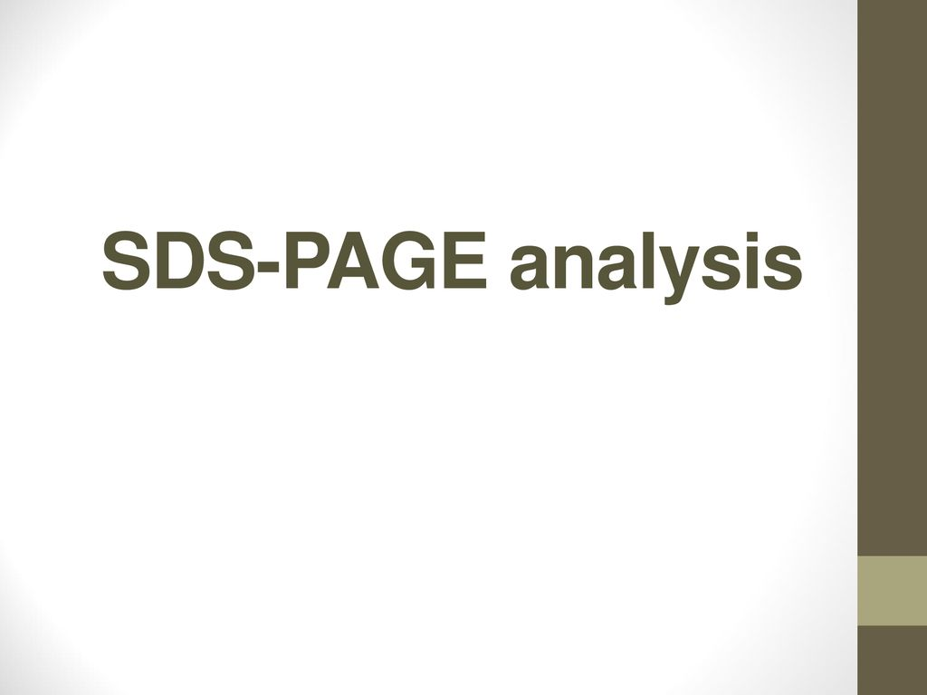SDS-PAGE analysis