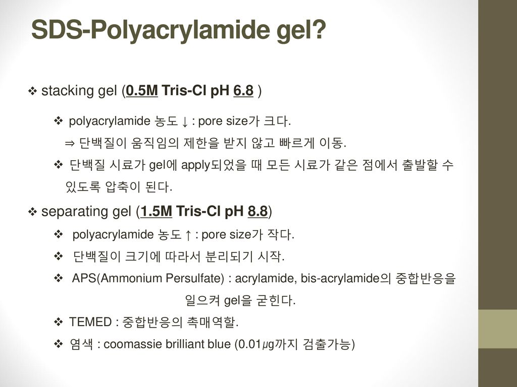 SDS-Polyacrylamide gel